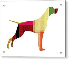 Setter Pointer Acrylic Print