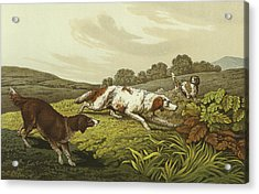 Setters Acrylic Print by Henry Thomas Alken