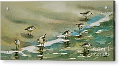 Seven Sandpipers At The Seashore  Acrylic Print