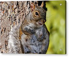 Acrylic Print featuring the photograph Sexy Squirrel by Bob Orsillo