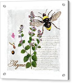 Shabby Chic Thyme Herb Bumble Bee Botanical Illustration Acrylic Print by Tina Lavoie