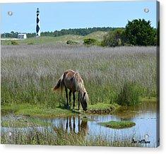 Shackleford Pony Acrylic Print