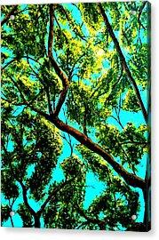 Shade Acrylic Print by Douglas Kriezel