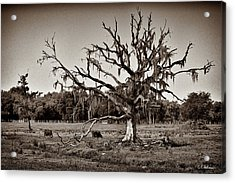 Shade Free - Sepia Acrylic Print by Christopher Holmes