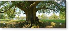 Shade Tree 2 Panoramic Acrylic Print by Mike McGlothlen