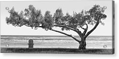 Shade Tree Bw Acrylic Print by Mike McGlothlen