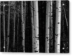 Acrylic Print featuring the photograph Shades Of A Forest by James BO Insogna