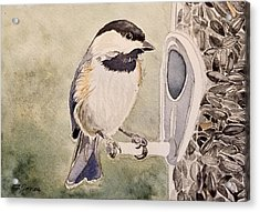 Shades Of Black Capped Chickadee Acrylic Print
