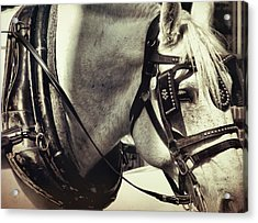 Shades Of Gray Acrylic Print by Dressage Design