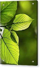 Shades Of Green Acrylic Print by Christina Rollo