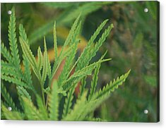 Shades Of Green Acrylic Print by Jean Booth