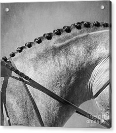 Shades Of Grey Fine Art Horse Photography Acrylic Print by Michelle Wrighton