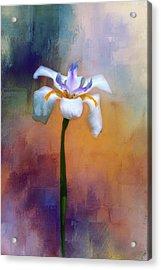 Shades Of Iris Acrylic Print by Carolyn Marshall
