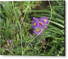 Shades Of Lavendar Acrylic Print by Debbie May