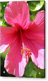 Shades Of Pink - Hibiscus Acrylic Print