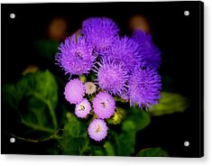 Shades Of Purple Acrylic Print by Karen Scovill