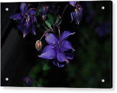 Shades Of Purple Acrylic Print by Marilynne Bull
