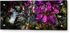 Shades Of Purple  Acrylic Print