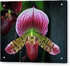 Acrylic Print featuring the photograph Shades Of Red by Robert Pilkington
