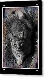 Shades Of Stevie Mouse Acrylic Print