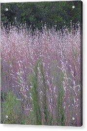 Shades Of Summer Grass Acrylic Print