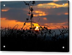 Acrylic Print featuring the photograph Shades Of Sun by Everett Houser