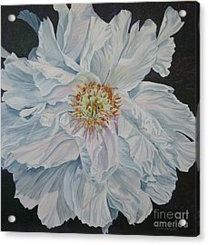 Shades Of White Acrylic Print by Helen Shideler