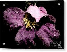 Shadow Blush Acrylic Print