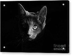 Shadow Cat Acrylic Print