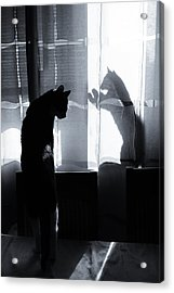 Shadow Cats Acrylic Print