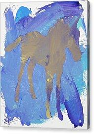 Shadow Foal Acrylic Print