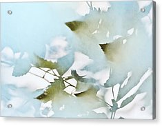 Shadow Leaves Acrylic Print