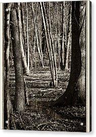 Shadowland Acrylic Print by Michael Putnam