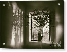 Shadows Dance Upon The Wall Acrylic Print