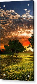 Shadows In The Meadow Left Of The Triple Acrylic Print by Debra and Dave Vanderlaan