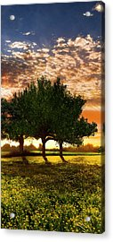 Shadows In The Meadow Middle Of The Triple Acrylic Print by Debra and Dave Vanderlaan