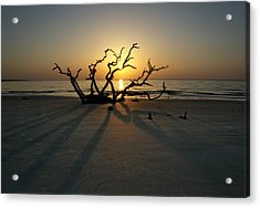 Shadows Of Driftwood Acrylic Print