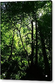 Shadows Of The Forest Acrylic Print by Nick Gustafson