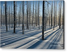 Shadows Of The Forest Acrylic Print by Sandra Bronstein