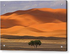 Acrylic Print featuring the photograph Shadows On The Dunes by Ramona Johnston