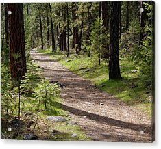 Acrylic Print featuring the photograph Shadows On The Path by Ben Upham III