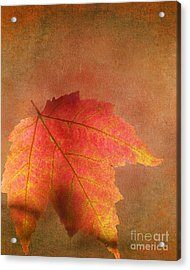 Shadows Over Maple Leaf Acrylic Print