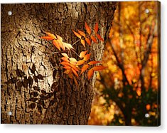 Fall Color Acrylic Print by Tam Ryan