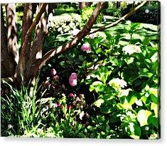 Acrylic Print featuring the photograph Shadows Through The Garden by Glenn McCarthy Art and Photography