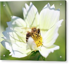 Acrylic Print featuring the photograph Shadowy Bee by Brian Hale