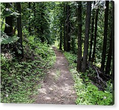Acrylic Print featuring the photograph Shady Grove Path by Ben Upham III