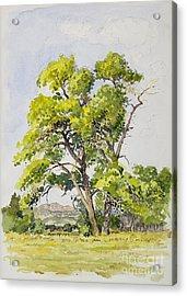 Shady Oak Tree Acrylic Print by James Robert MacMillan