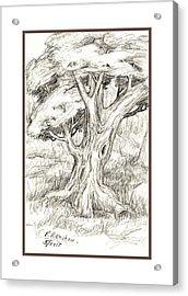 Shady Tree Acrylic Print by Ruth Renshaw