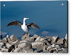 Acrylic Print featuring the painting Shag Drying The Wings by Yurix Sardinelly