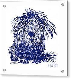 Shaggy Acrylic Print by Barry Nelles Art